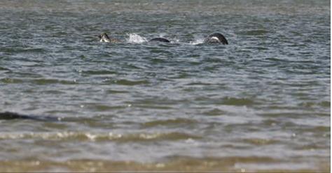 """""""Il mostro di Loch Ness? Fandonie"""". Ma in riva al lago vede qualcosa che lo lascia senza fiato – FOTO"""