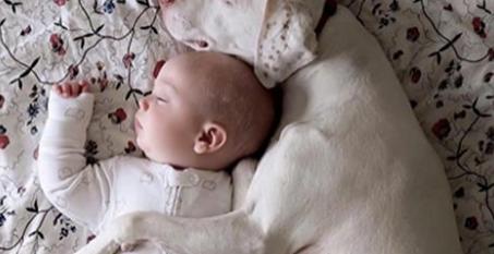Questo cane traumatizzato giace accanto al bimbo che dorme. Quello che accade dopo ha fatto impazzire la rete per la dolcezza