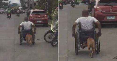 Il Cane Spinge La Sedia A Rotelle Del Padrone Una Storia